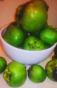 Black Sapote from my garden