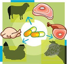 Antibiotics in meat